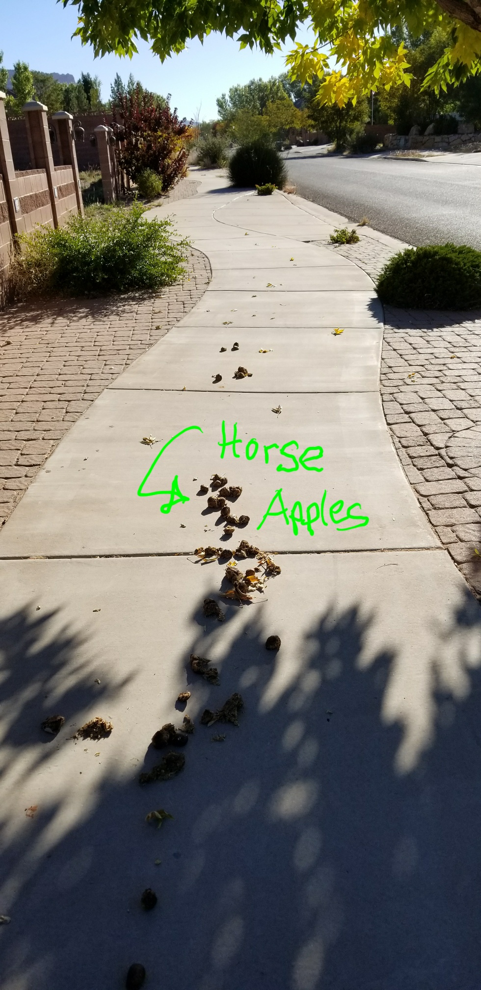 Horse Apples2