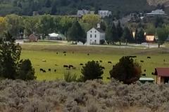 Pine Valley 26