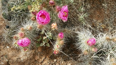 Cactus3