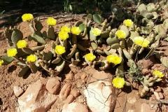Cactus 5-5-2