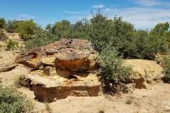 The Ridge 11