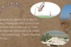 Wild Desert Slideshow_Page_3