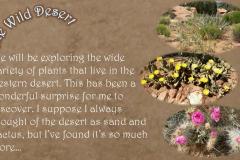 Wild Desert Slideshow_Page_4